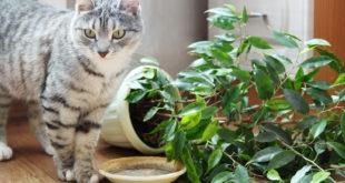 Як захистити рослини від кота